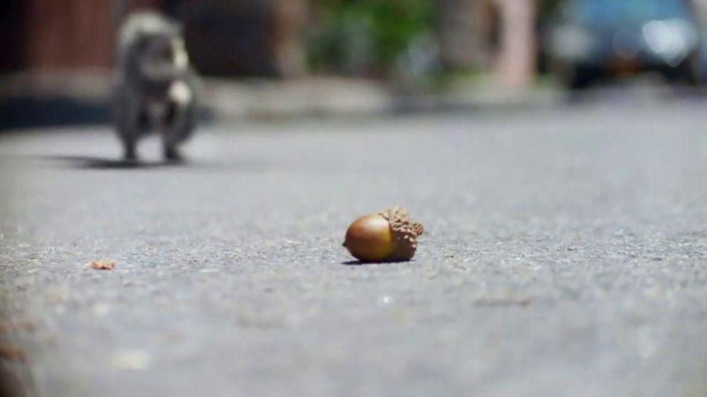 Volkswagen Tiguan TV Commercial, 'Nuts' [T1]