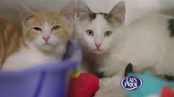 Cat's Pride TV Spot, 'Litter for Good: Help Millions' Feat. Katherine Heigl - Thumbnail 2