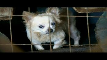 Humane Society, 'Stop Cruelty' Featuring Kaley Cuoco - Thumbnail 3