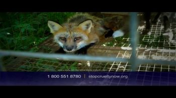 Humane Society, 'Stop Cruelty' Featuring Kaley Cuoco - Thumbnail 6