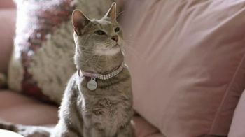 Wells Fargo App TV Spot, 'Suspicious Card Activity Alerts: Cat' - Thumbnail 4