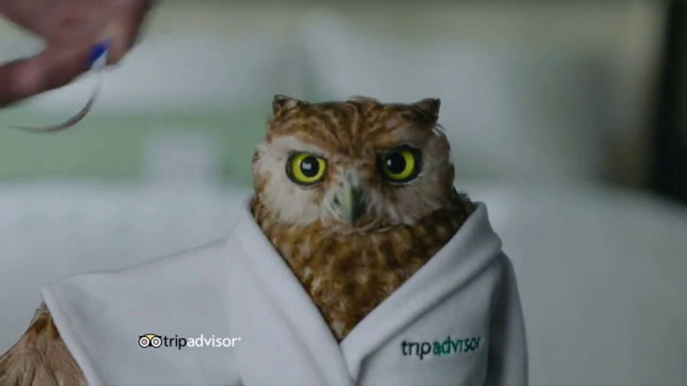 Trip Advisor Tv Commercial A Price That Fits Ispot Tv
