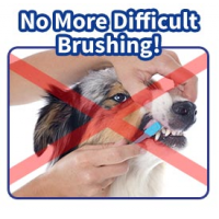 Brush 'N Play