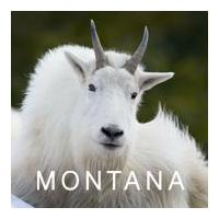 Montana Office of Tourism