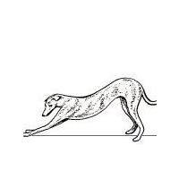Adopt a Greyhound.org